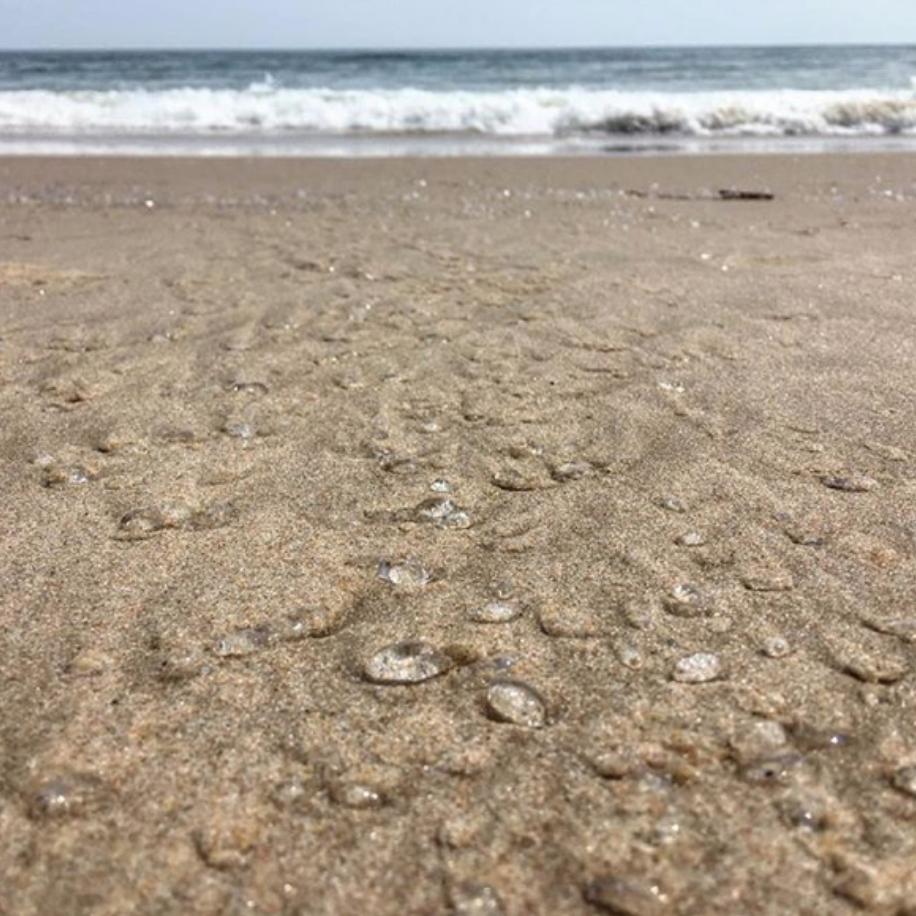 aesthetic photo of the beach