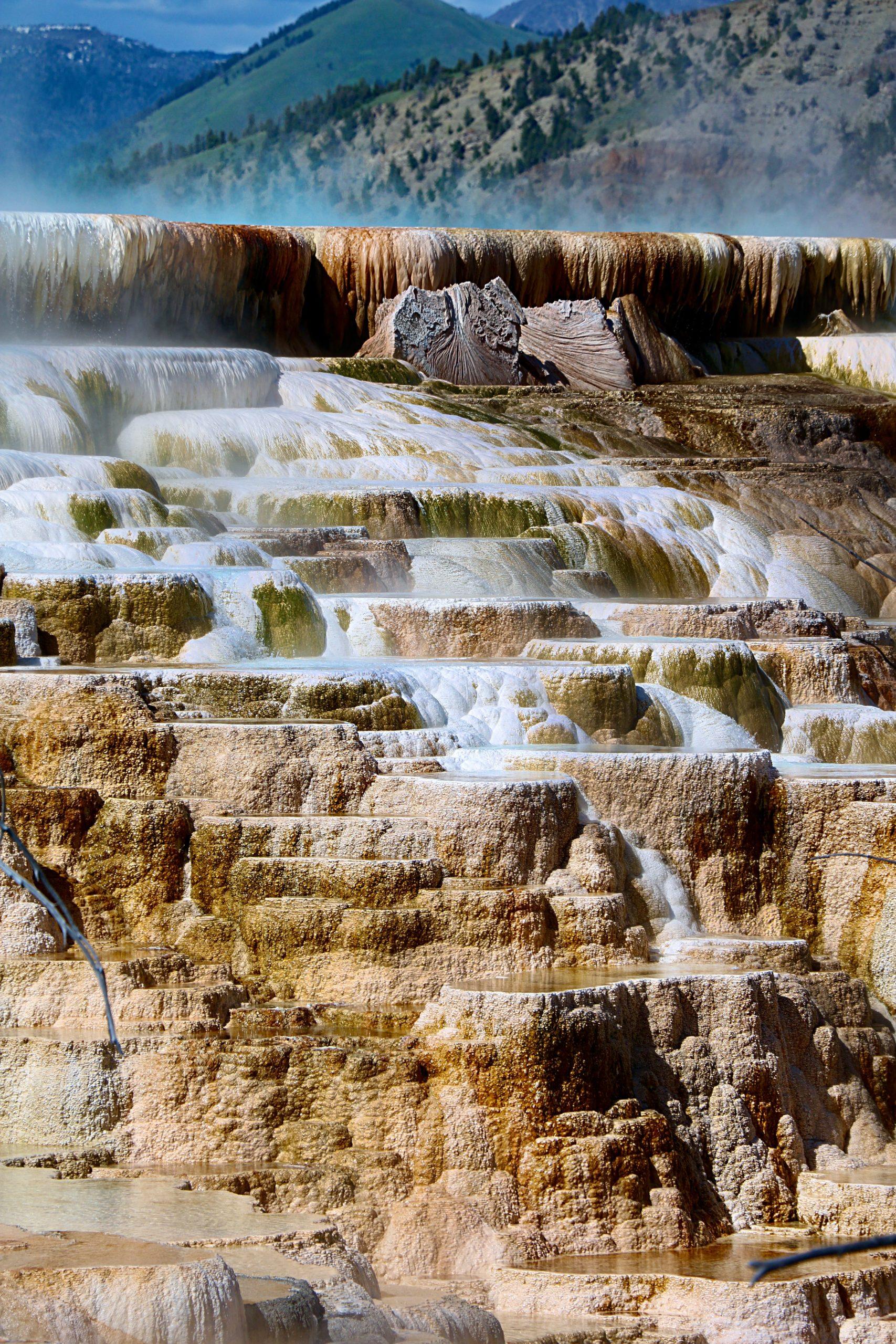 mammoth spring in yellowstone