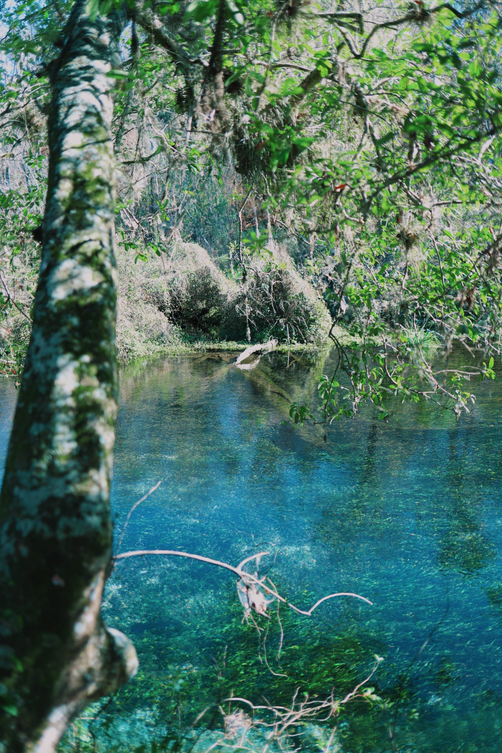 Blue Hole Springs on the Itchetucknee River at this hidden gem in Florida.