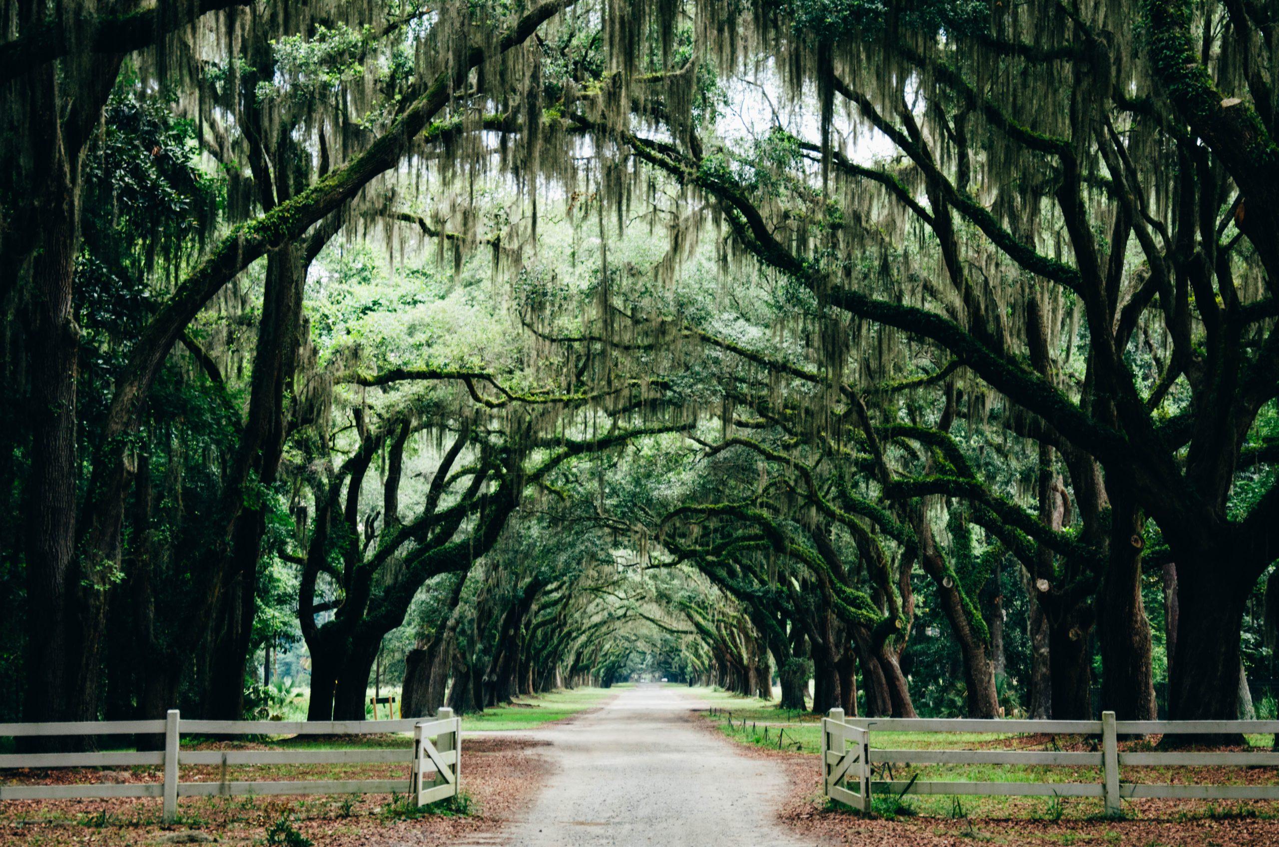 tree lined street of savannah georgia united states