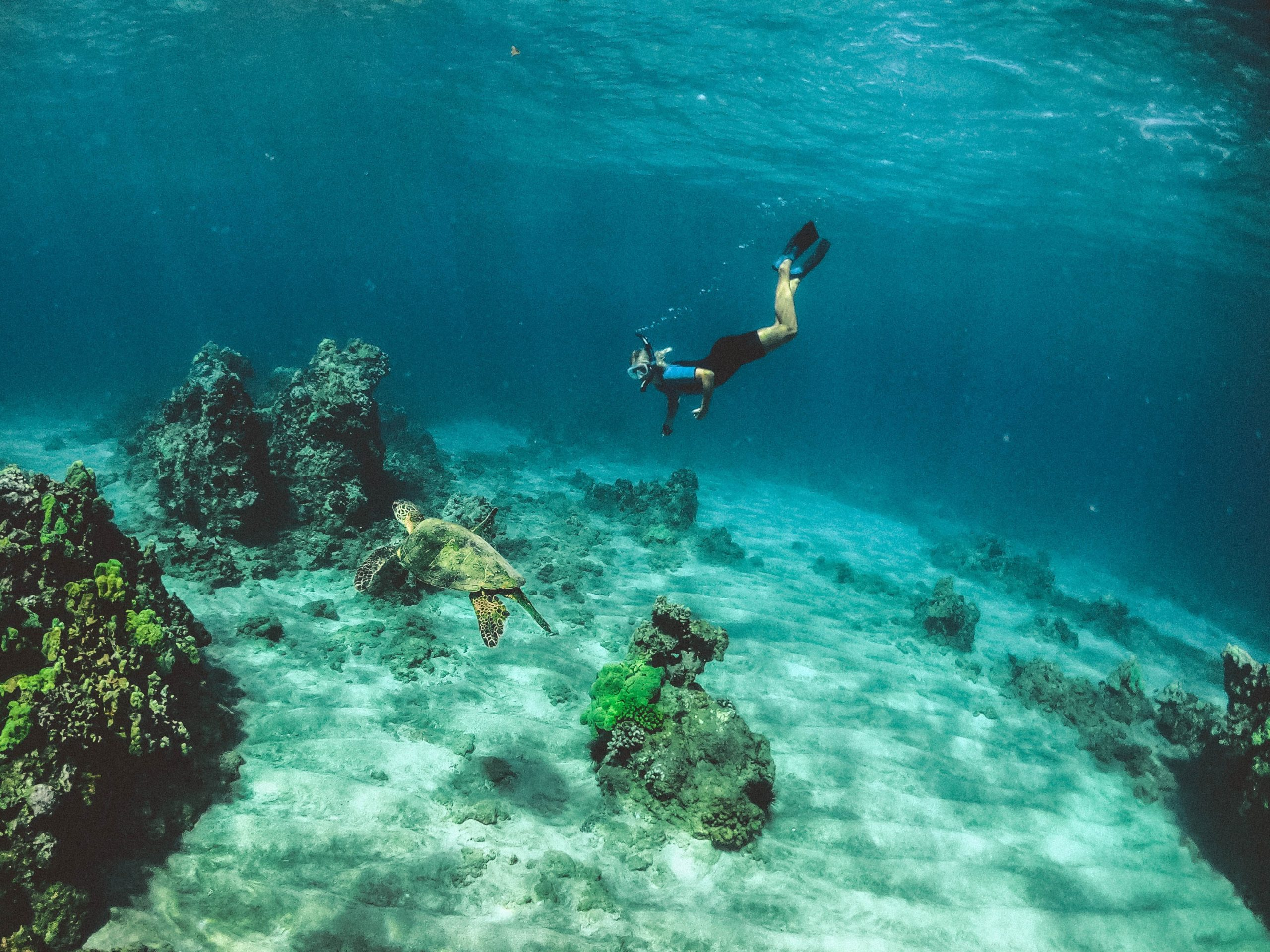 scuba diver swimming in maui hawaii in the united states